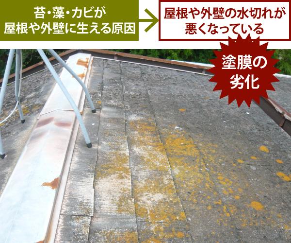 屋根や外壁の水切れが悪くなっている→苔・藻・カビが屋根や外壁に生える原因