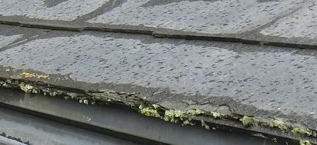 コケが生えている屋根材