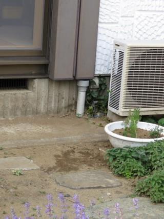 雨樋掃除2