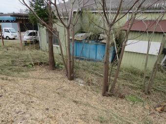 竹伐採作業2
