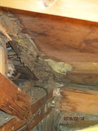 屋根裏雨漏り被害