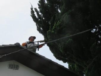 木の伐採工事