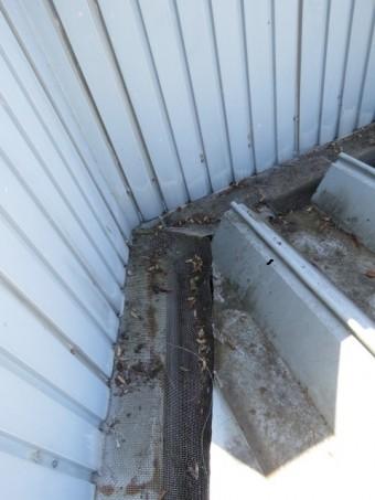 樋からの雨漏り2