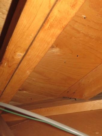 天井裏の様子4